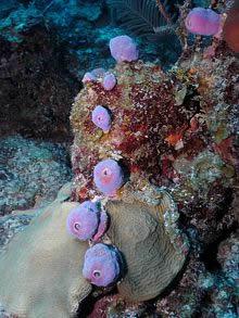 Majahual-buceo info@blueplayarealestate.com Properties for sale in Playa del Carmen Blue Playa Real Estate